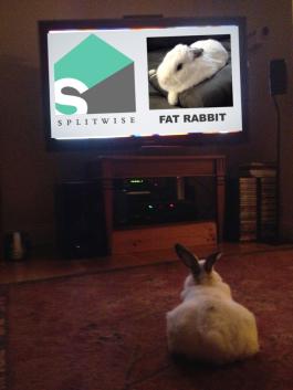 fat rabbit watching fat rabbit 1